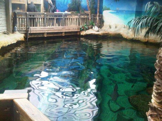 Oceanarium: Lovely view