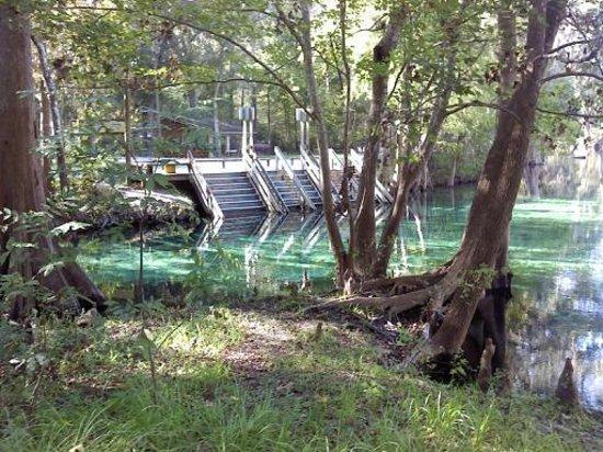 Ginnie Springs: beautiful