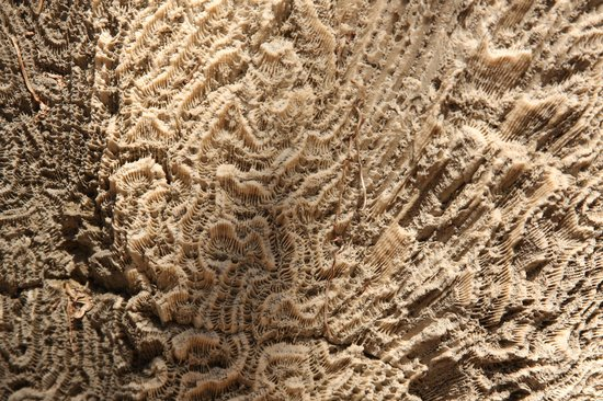 Windley Key Fossil Reef Geological State Park: fossils