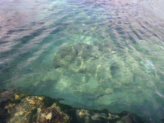 Xel-Ha: el agua hermosa..