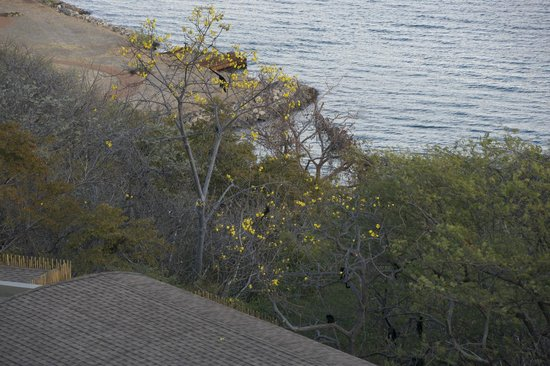 Andaz Costa Rica Resort At Peninsula Papagayo: A troop of monkeys seen from our room, grazing in the afternoon.