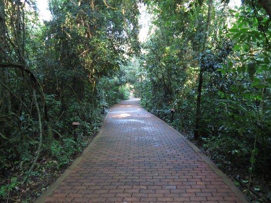 La Aldea de la Selva Lodge : camino a las cabañas