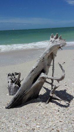 Naples Bay Resort: PARTICOLARE SPIAGGIA