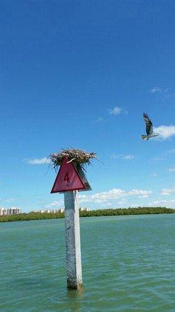 Naples Bay Resort: NIDO