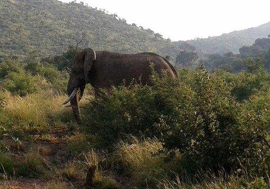 Ama-Zing Pilanesberg Safari Private Day Tour : Wanted to take him home! ♥