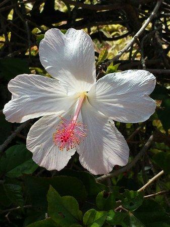 Dole Plantation : Hibiscus