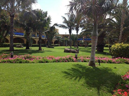Club Drago Park Hotel: Hotel gardens