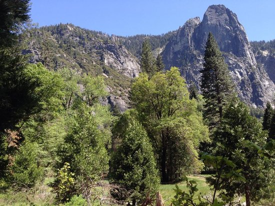 Yosemite Valley Lodge: View behind our room