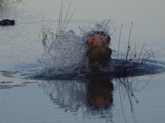 Horizon Horseback Adventures Lodge: Hippo