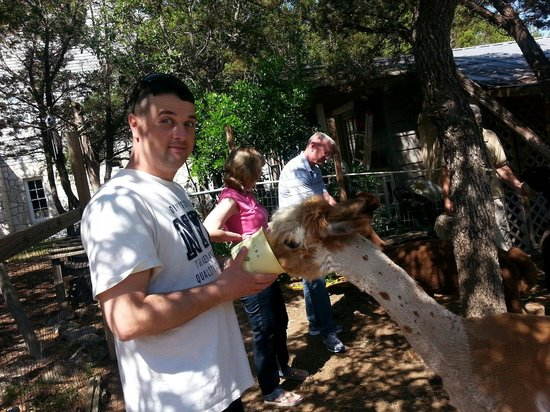 Biscuit Hill Bed & Breakfast Inn : Feeding the alpacas