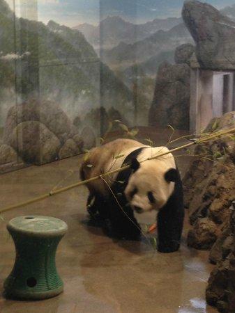 National Zoological Park: Filhote de Panda