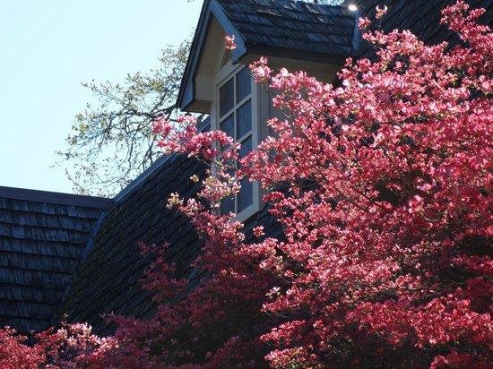 Riverside Inn: Springtime blooms