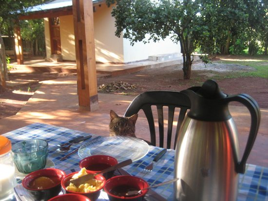 Casa Yaguarete: One of Lorena's friendly cats!