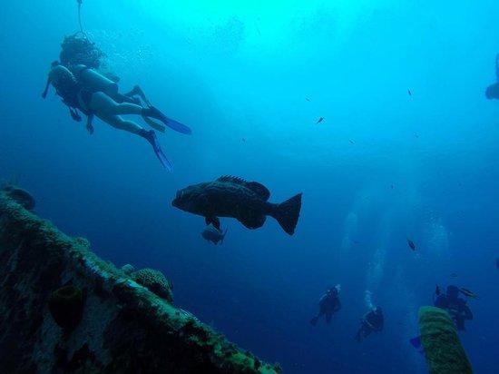 West Bay Divers: grouper