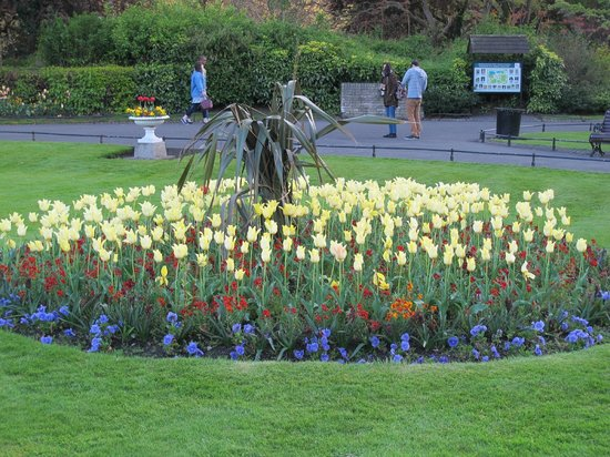 St Stephen's Green : Spring Flowers in Bloom