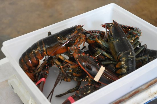 Ryer Lobsters: Our six fresh lopbsters