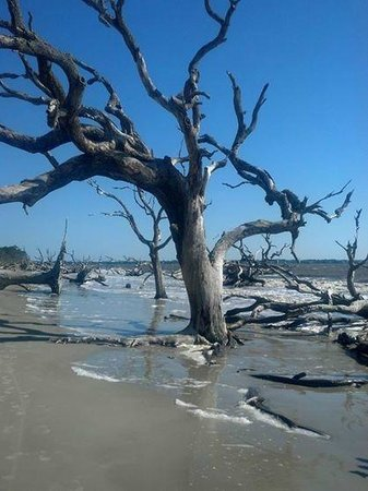 Jekyll Island Campground: Driftwood Beach-short walk