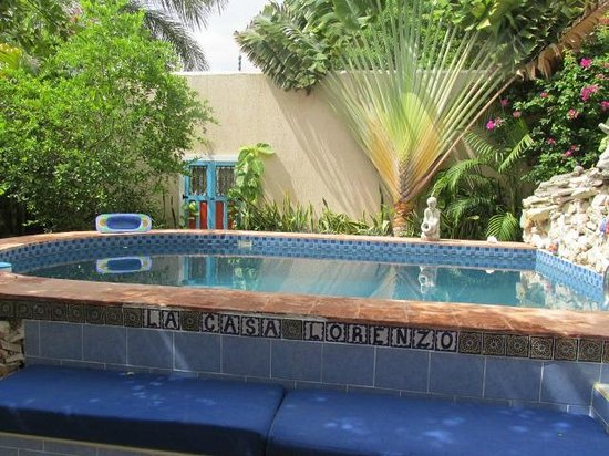 La Casa Lorenzo: Pool and traveler's palm