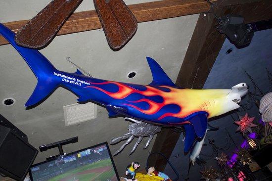 Baja Sharkeez: Is this Sharkee himself?