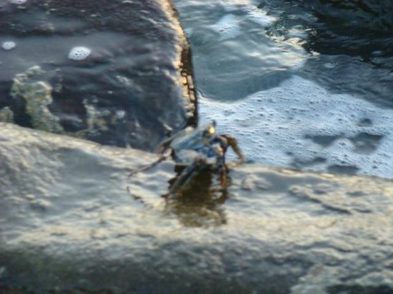 Villa Flamenco Beach : crab