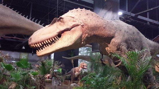 Battle of the Titans: Dinosaur model