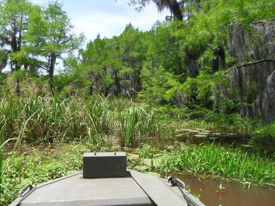 Caddo Outback Backwater Tours: Swamp