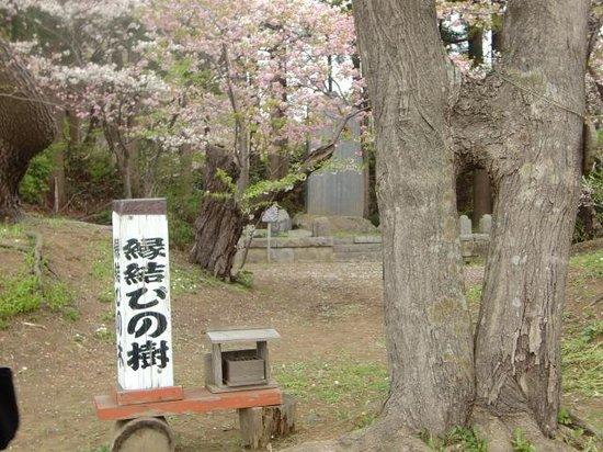 Matsumae Park: 5月6日。中旬、下旬も遅咲きの花で楽しめるそうです