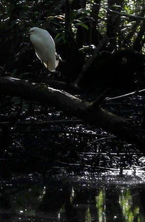 Cachoeira do Rio do Engenho ( Cachoeira do Cleandro ) : Belo, mas desconheço a especie do pássaro