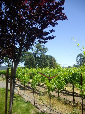 Wine Country Tour Shuttle: Franciscan Winery
