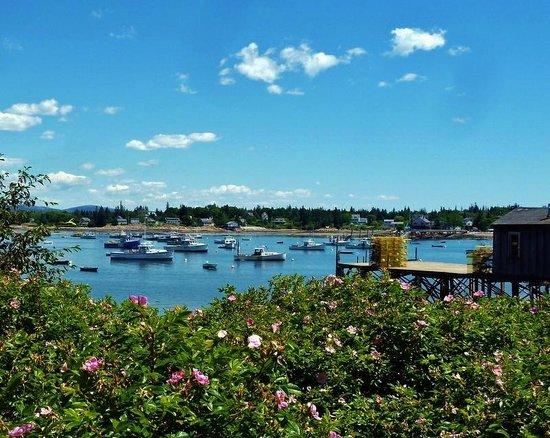 Harbourside Drive: NE Harbor shoreline