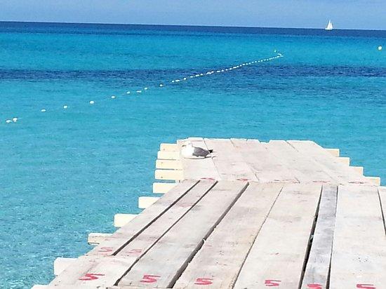 Strand Playa de ses Illetes: Il paradiso