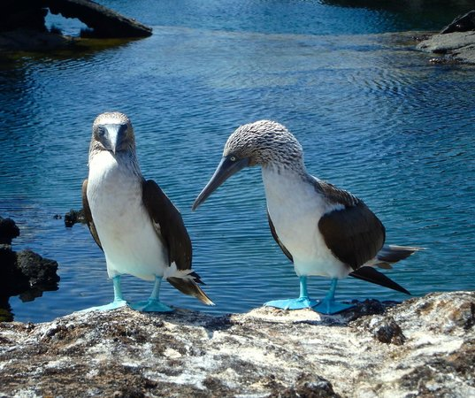 Galapagos Alternative - Day Tours: A couple of locals