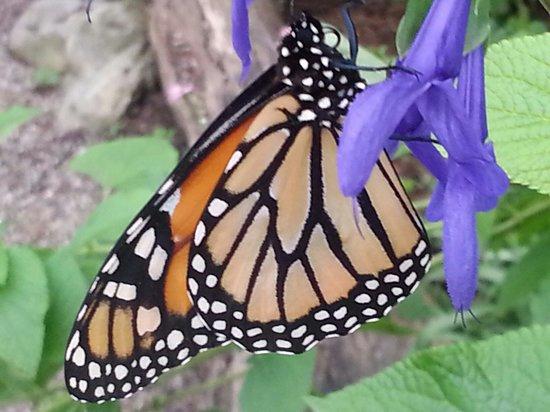 Brookgreen Gardens: Magical Monarch at Brookgreen