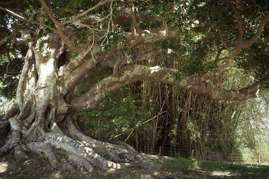 SummerHills Retreat Byron Bay: the love tree