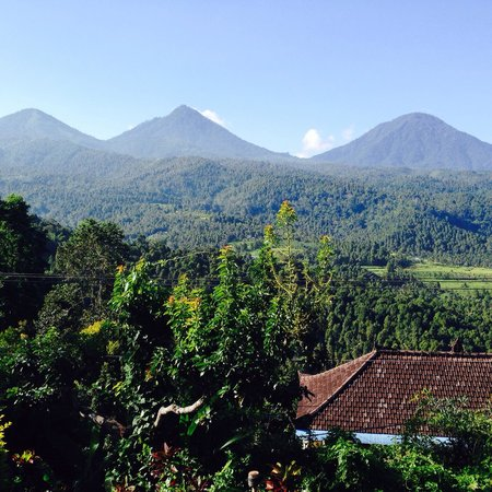 Puri Lumbung Cottages : View from the breakfast restaurant