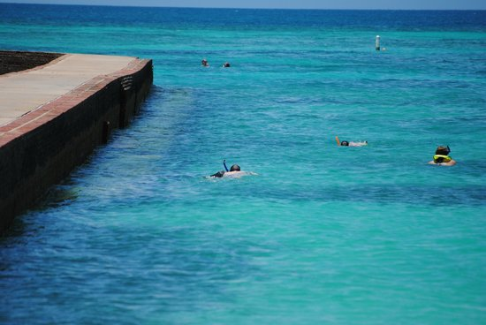Dry Tortugas National Park: Snorkeling at Ft. Jefferson