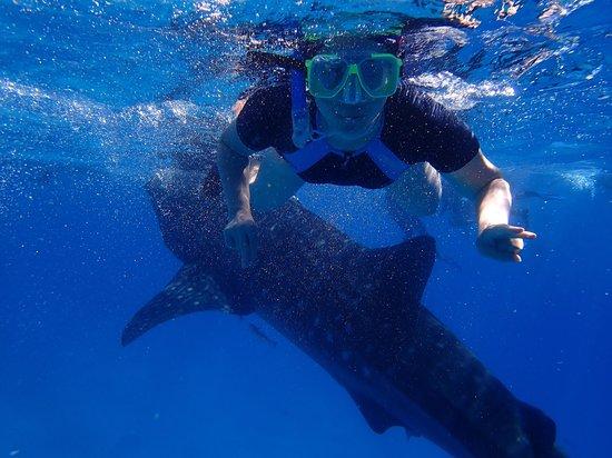 Granada Beach Resort : swimming with whale shark