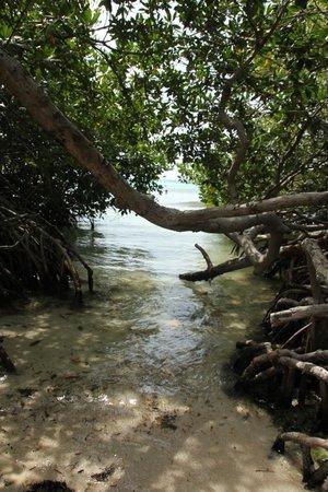 Mangel Halto Beach: enter through the mangroves