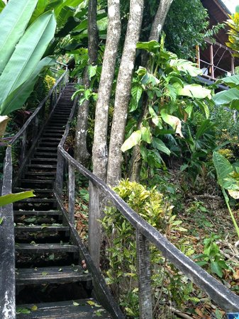 Lookout Inn Lodge: The stairs leading up to the Monkey House