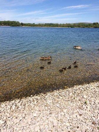 Pine Lake Resort: lots of ducks to feed