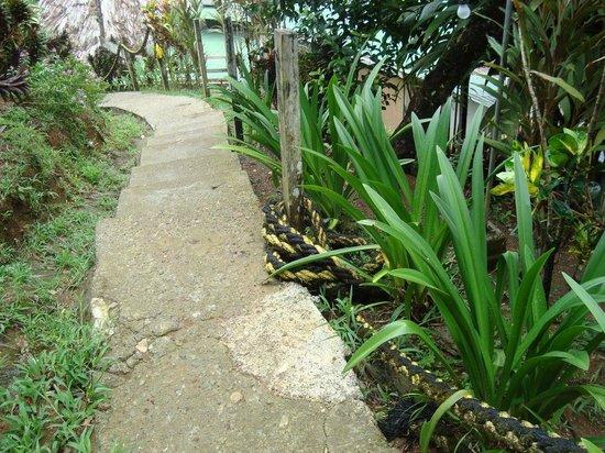Hotel Rancho Corcovado: Weg zum Strand ohne Geländer
