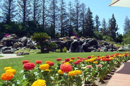 Four Seasons Hotel Westlake Village : Beautiful flowers by the waterfall
