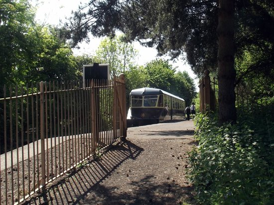 Didcot Railway Centre: GWR Railcar 22 in a rural setting at the Centre's Oxford Road Halt.