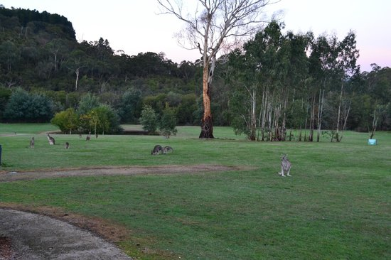 Yering Gorge Cottages: Wildlife all around the cottages