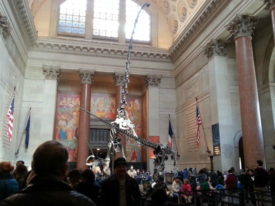 American Museum of Natural History : hall