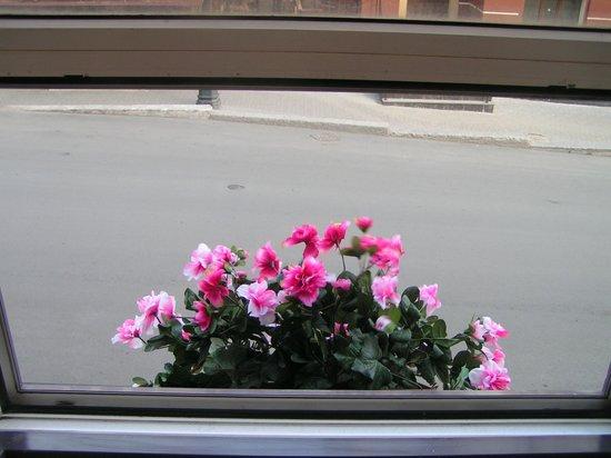 Regina Universitetskaya: Утром не только взгляд радует, но и обоняние. (маленький садик у окошка)