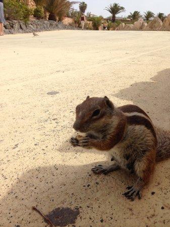 SENTIDO H10 Playa Esmeralda : Hörnchen