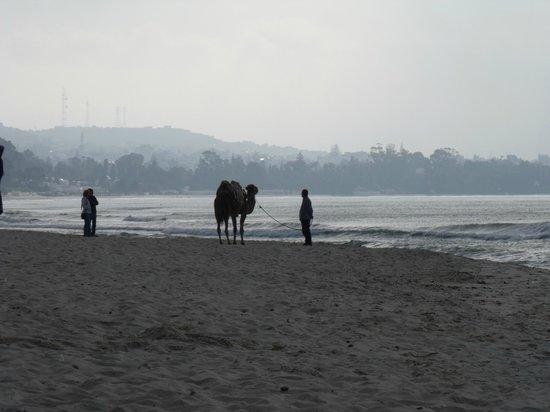 The Orangers Beach Resort & Bungalows : Early morning(facing Hammamet)