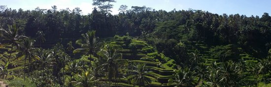Tegalalang Rice Terrace: AWESOME VIEW