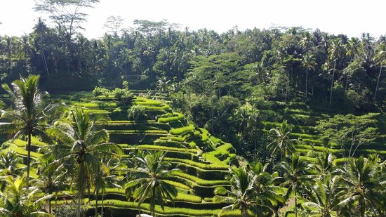 Tegalalang Rice Terrace : AWESOME VIEW